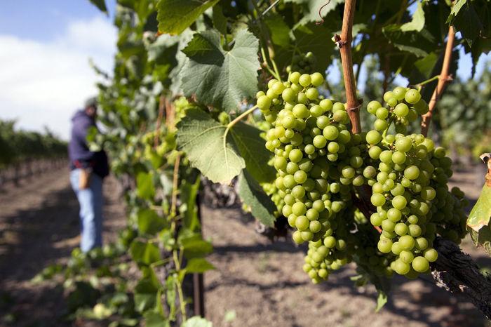 Retzlaff Winery