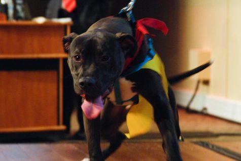 Fur Ball fundraises for animal shelter