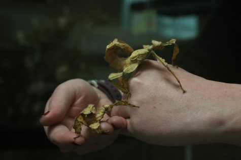 Entomology department to showcase crawly critters