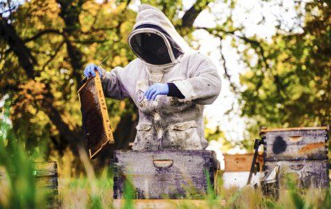 'The honeybee stands apart. It's different'
