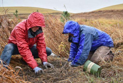 Volunteers work to restore habitat