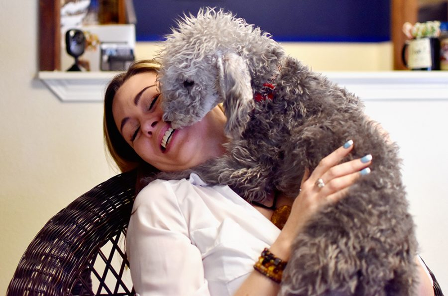 Amber Wright, owner of Amber's Grooming Salon, holds Jester, a 5-month-old Bedlington Terrier, Monday morning at her salon.