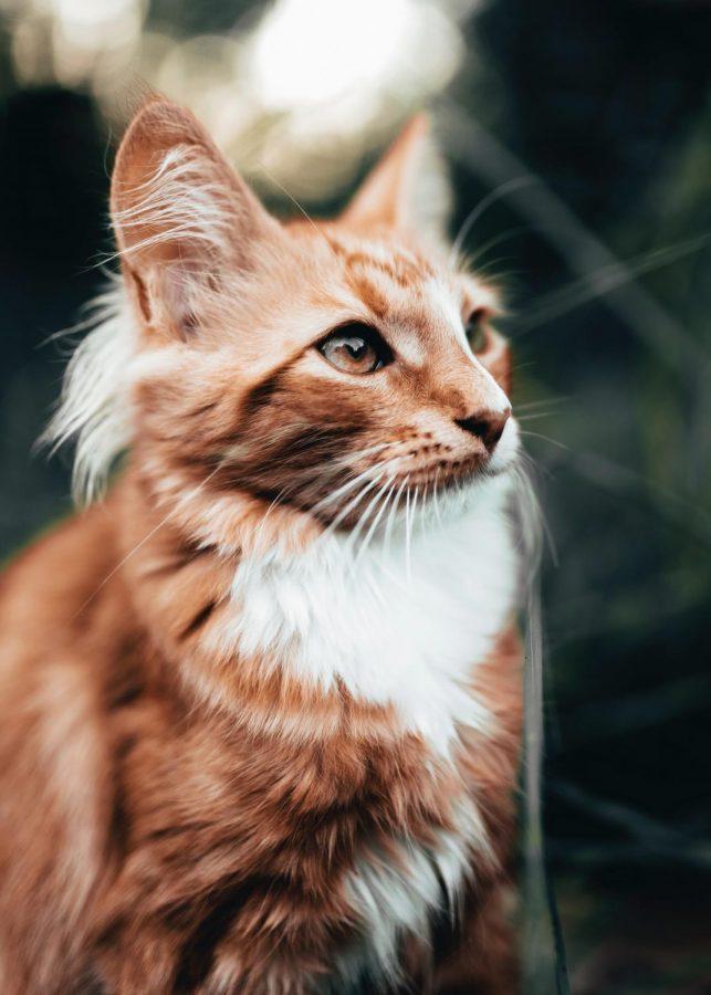 Doja Cat will not perform at WSU