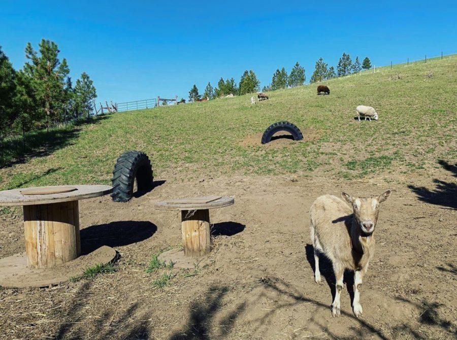 Animal sanctuary rescues farm animals