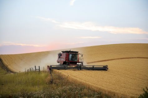 Grain growers, like the Northwest Grain Growers in Walla Walla, said the conditions for growing this year have been optimal due to the right amount of rain.
