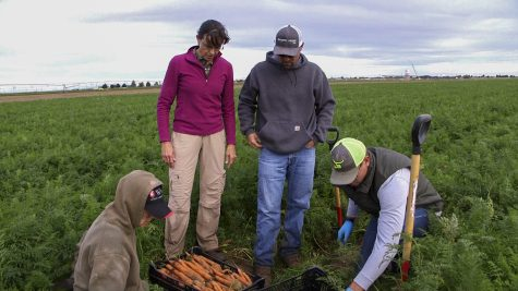 A team of researchers is studying different treatments to kill the bacteria that causes a disease in carrot seeds. The disease is not harmful to people who eat the crop, but carrots cannot produce enough nutrients if they are infected with it.