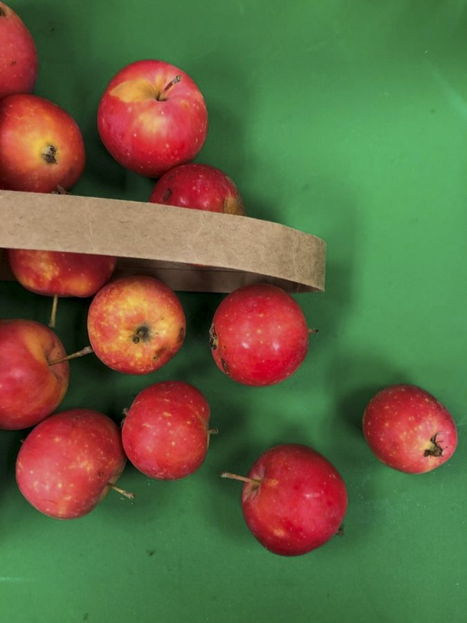 Cider+apples+contain+fewer+nutrients+and+amino+acids+than+other+fruits%2C+making+them+harder+to+ferment.+The+researchers+want+to+understand+the+types+of+nutrients+available+in+the+apples.