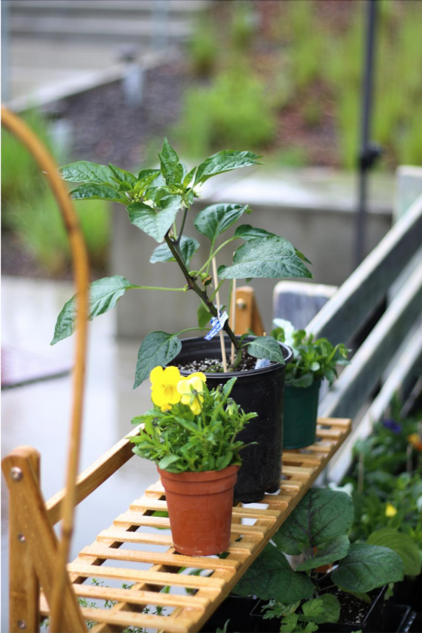 Horticulture Club members can earn scholarships towards their tuition by participating in club activities.