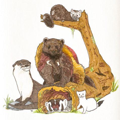 Left: River otter. Center: Wolverine. Bottom: American badger. Right: Ermine. Top: Pine marten.
