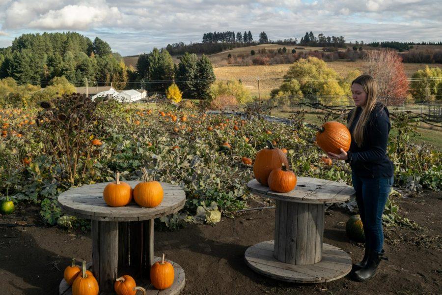 Washington State University junior Tessa Klebaum observes pumpkins at the WSU Eggert Organic Farm Pumpkin Patch, Oct. 5, 2021, in Pullman, Wash.